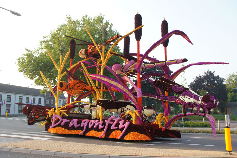 2013 Dragonfly